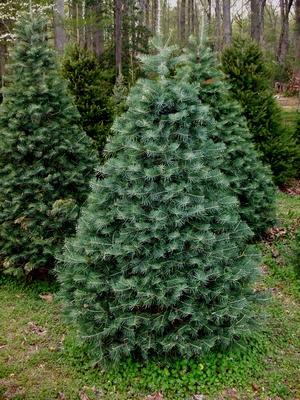 Four Foot Christmas Tree