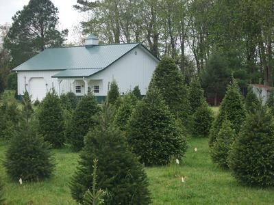 spence tree farm