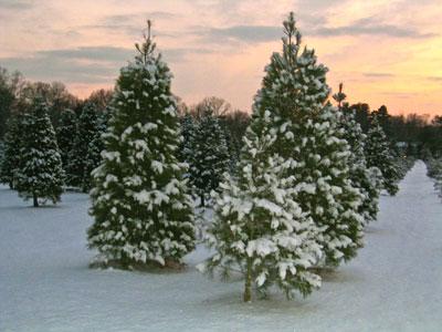 Christmas Tree Fasteners